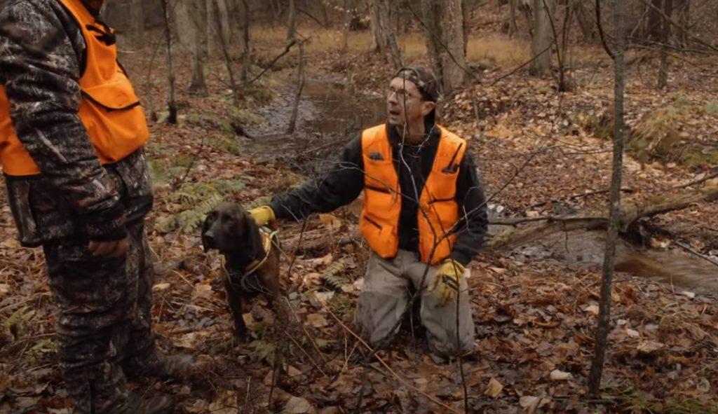 chasse avec chien de sang