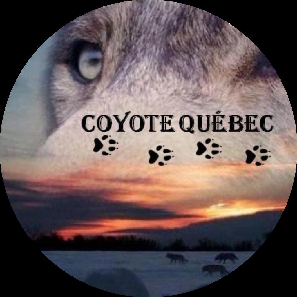 coyote quebec