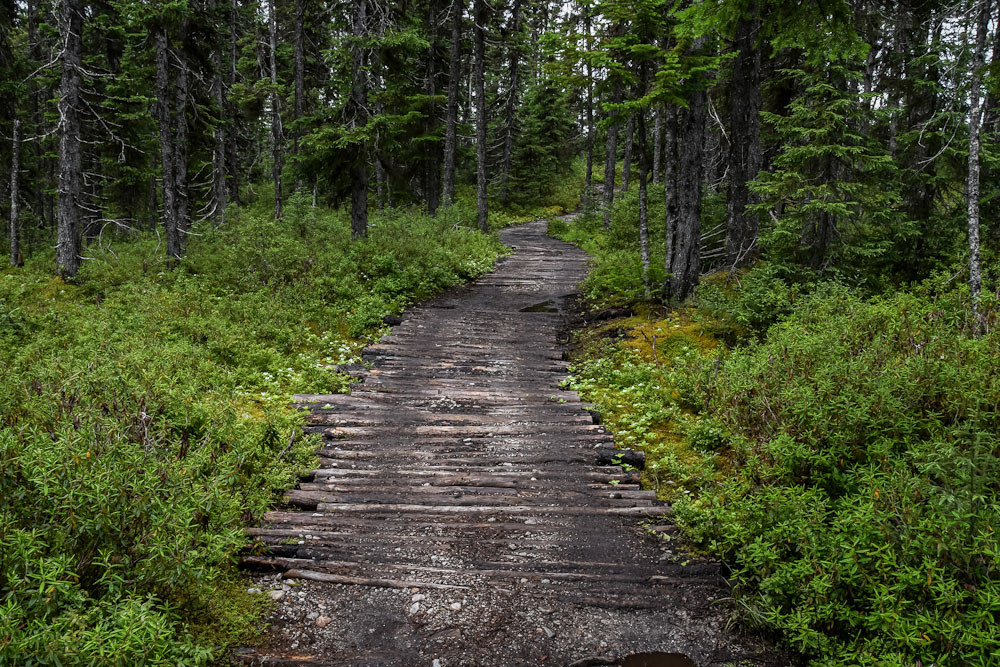 sentier pédestre à la pourvoirie